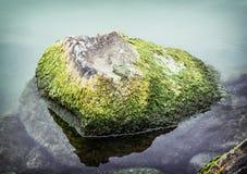 De onkruid overwoekerde steen in het meer, natuurlijke scène Royalty-vrije Stock Afbeelding