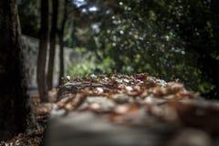 De onmiddellijke herfst Royalty-vrije Stock Afbeeldingen