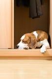 De ontbrekende hond. stock foto's