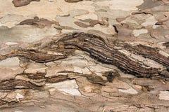 De ontsierde textuur van de boomschors Stock Foto's
