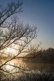 De onvruchtbare takken van het zonsopgangsilhouet Royalty-vrije Stock Foto's