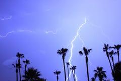De Onweersbui van de Bomen en van de Bliksem van palmen Stock Foto's