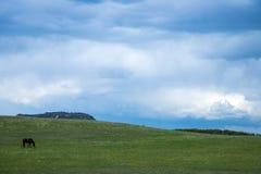 De onweerswolken behandelen de hemel over een groen weiland en rollende heuvels Stock Fotografie