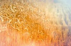 De oogst is begonnen stock afbeeldingen