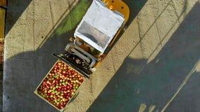 De oogst van appelen, kleine lader, vorkheftruck, machine maakt een grote vrachtwagen, wagen met groot houten dozenhoogtepunt van stock video