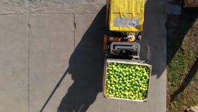 De oogst van appelen, kleine lader, vorkheftruck, machineladingen, zet groot houten dozenhoogtepunt van groene appelen bovenop stock videobeelden