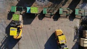 De oogst van appelen, kleine laders, vorkheftrucks, machineslading, zette groot houten dozenhoogtepunt van groene appelen bovenop stock video