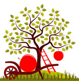 De oogst van Apple Stock Foto