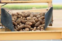 De Oogst van de aardappel stock afbeeldingen