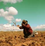 De Oogst van de aardappel in de Andes Stock Foto's
