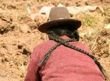 De Oogst van de aardappel in de Andes Stock Afbeeldingen