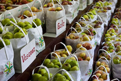 De Oogst van de appel Royalty-vrije Stock Afbeeldingen