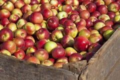 De Oogst van de appel Stock Foto's