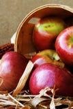 De Oogst van de appel Stock Fotografie