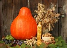 De oogst van de herfst Royalty-vrije Stock Foto's