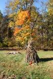 De Oogst van de herfst stock foto's
