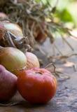 De oogst van de herfst Stock Afbeelding
