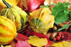 De oogst van de herfst, pompoenen met multicolored bladeren Stock Fotografie