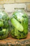 De oogst van de komkommer, groenten in het zuur Royalty-vrije Stock Afbeeldingen