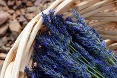 Lavendeloogst stock afbeelding