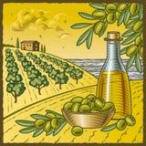 De oogst van de olijf Stock Afbeelding