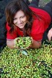 De oogst van de olijf stock foto's