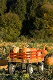 De oogst van de pompoen Royalty-vrije Stock Foto