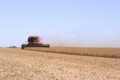 De oogst van de sojaboon Stock Afbeeldingen