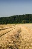 De oogst van de tarwe Stock Foto