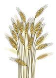 De oogst van de tarwe Royalty-vrije Stock Afbeelding