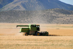 De oogst van de tarwe Stock Fotografie