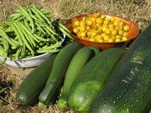 De oogst van de tuin stock foto