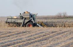 De oogst van de winter Stock Fotografie