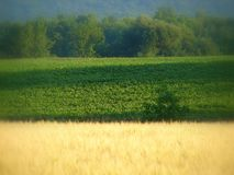 De oogst van de zomer Royalty-vrije Stock Fotografie