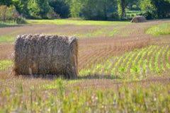 De Oogst van het Gebied van het Hooi van landbouwers Stock Foto