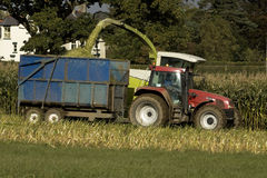 De oogst van het graan stock fotografie
