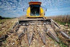 De oogst van het graan stock foto's