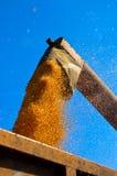 De oogst van het graan royalty-vrije stock fotografie