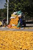 De oogst van het graan in China Stock Foto's