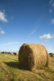 De oogst van het gras Royalty-vrije Stock Foto's