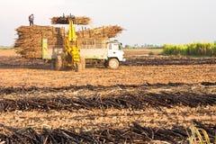 De oogst van het suikerriet. Royalty-vrije Stock Foto