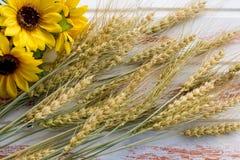 De oogst van tarwe stock afbeeldingen