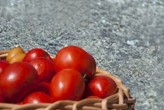 De oogst van tomaten stock afbeeldingen