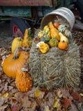 De oogstgulle gift van de herfst Een grote Zoete Pompoen van de Bol vulde met vruchten en groenten van oogst op duidelijke gele a stock afbeelding