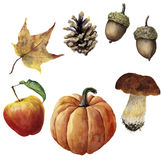 De oogstreeks van de waterverfherfst De hand schilderde denneappel, eikel, pompoen, appel, paddestoel en geel blad dat op wit wor Royalty-vrije Stock Foto