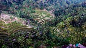 De Oogstseizoen II van Bali Stock Foto's