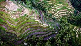 De Oogstseizoen II van Bali Royalty-vrije Stock Foto
