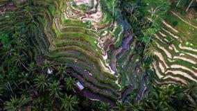 De Oogstseizoen II van Bali Royalty-vrije Stock Afbeeldingen