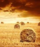De oogsttijd van de tarwe stock afbeeldingen