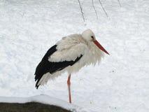 De ooievaar bevriest op witte sneeuw royalty-vrije stock foto's